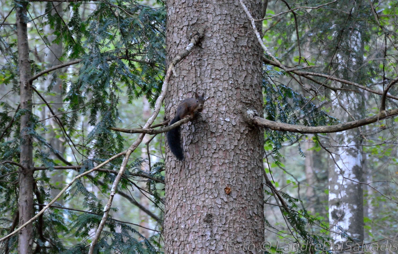 Incontri nel bosco!