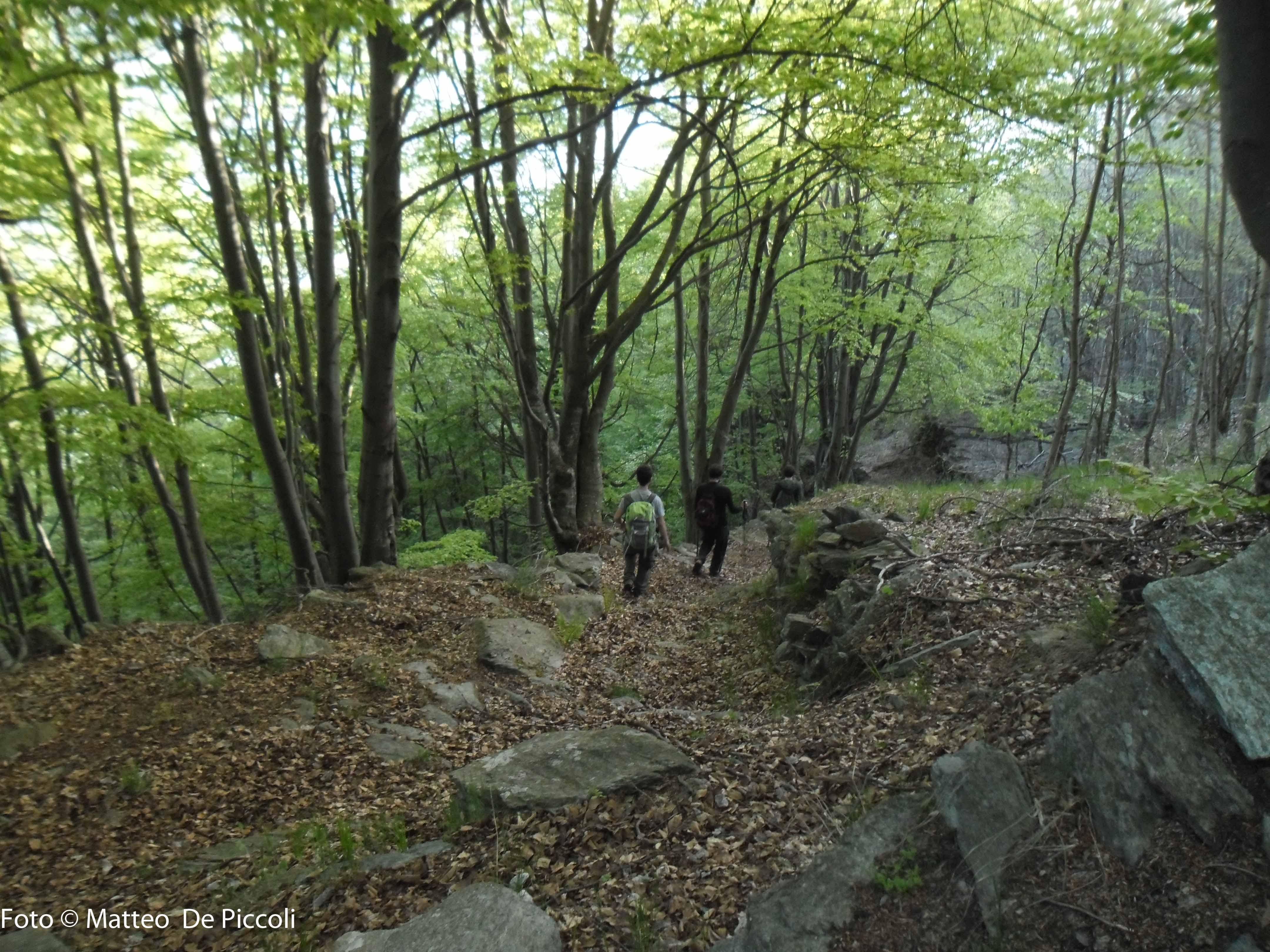 Il bosco sotto Maffiotto