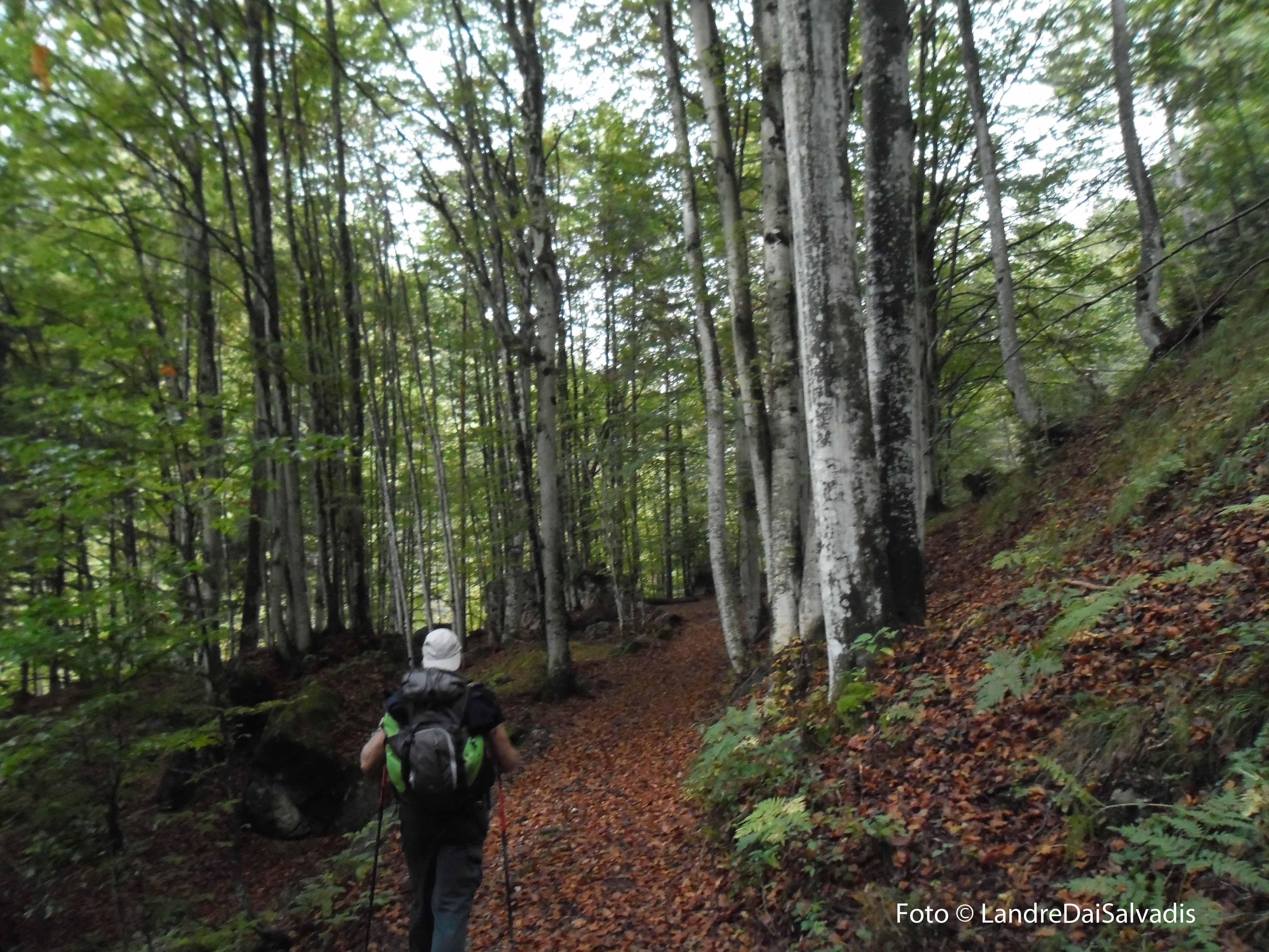 Il bosco del sentiero 364