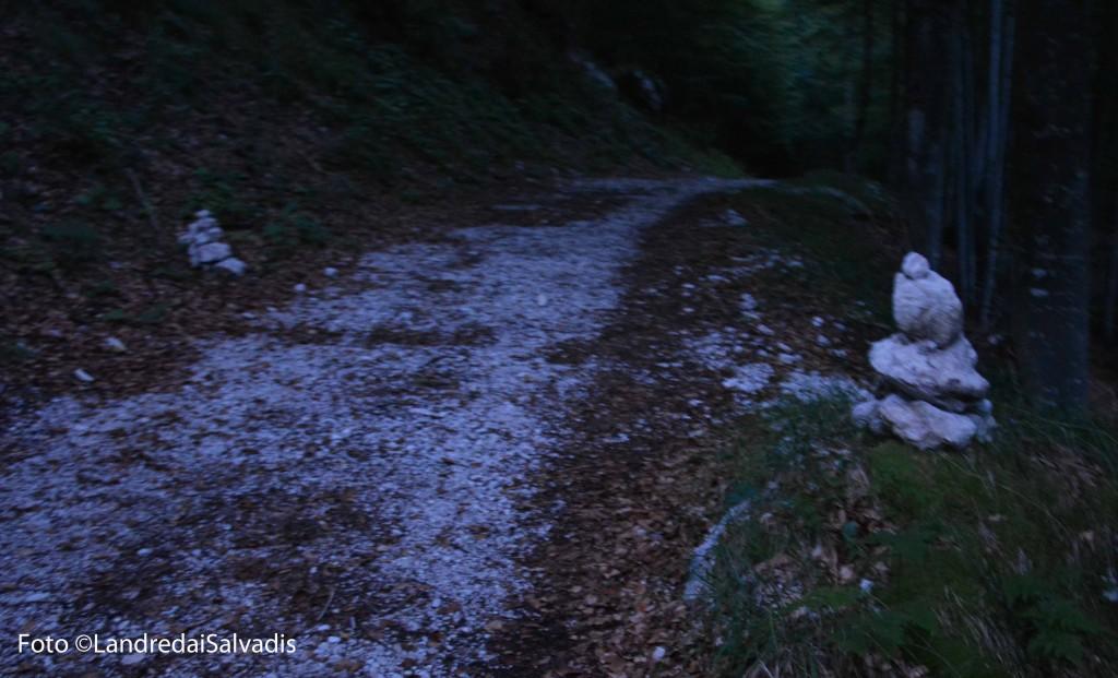 L'imbocco della Via di Dogna dalla strada forestale.